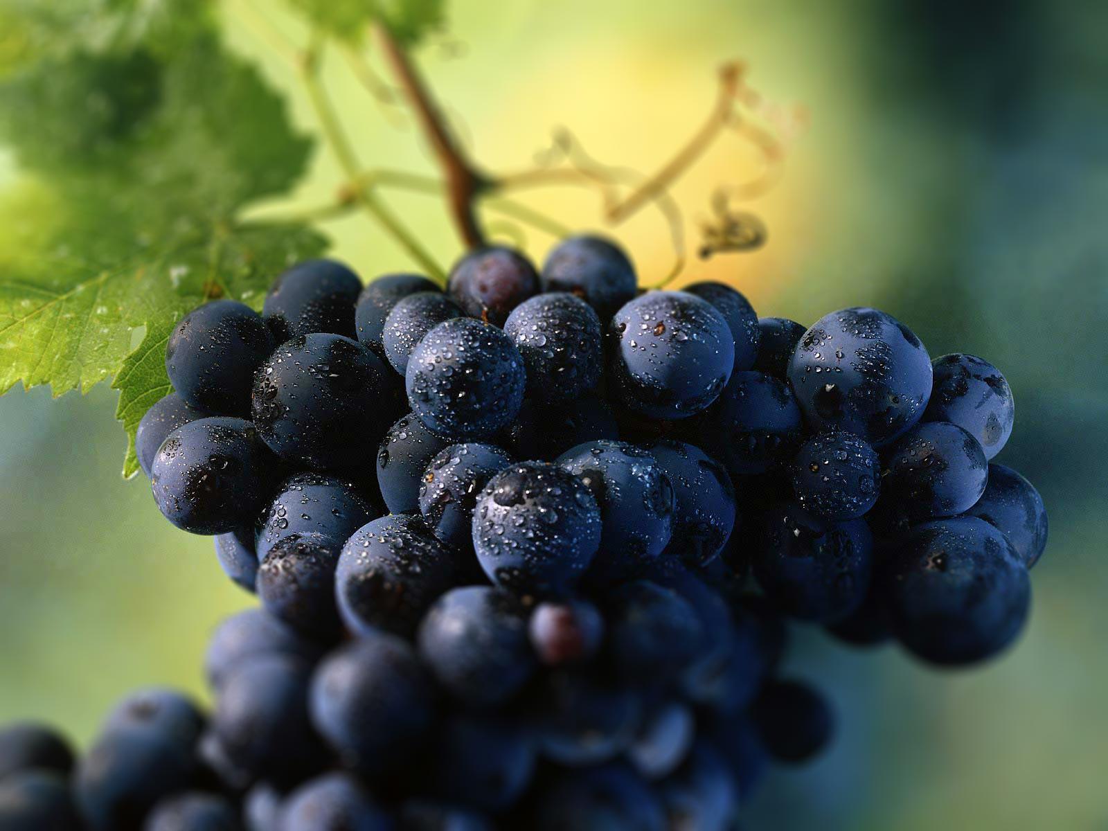 tokajská vinohradnícka oblasť