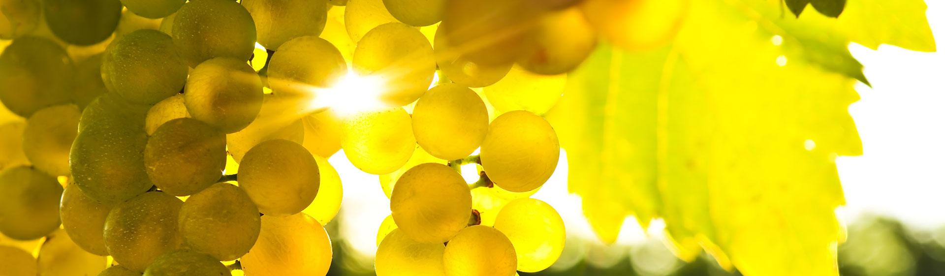 ochutnávka tokajského vína z juhoslovenských viníc vo vinotéke Forvin